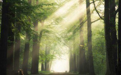 PLANT-MY-TREE® und 360.ITleague – Die Baum-Patenschaft für eine grüne und nachhaltige Zukunft!
